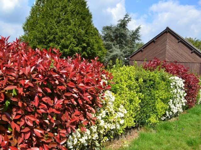 Sichtschutz Garten Hecke mix