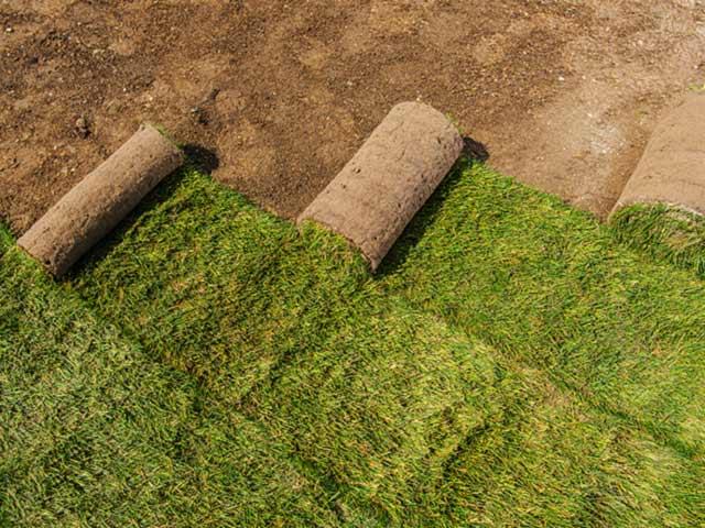Rasen anlegen